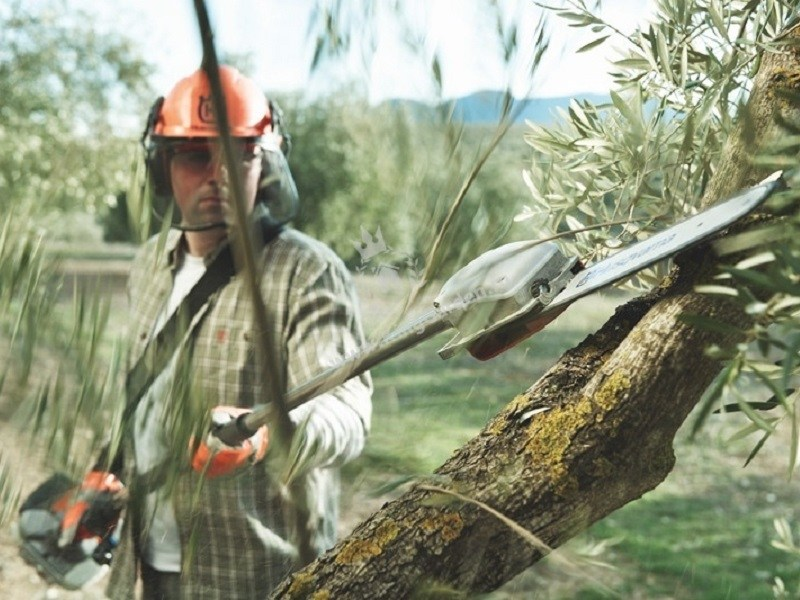 Everything You Need To Know About Pole Saws
