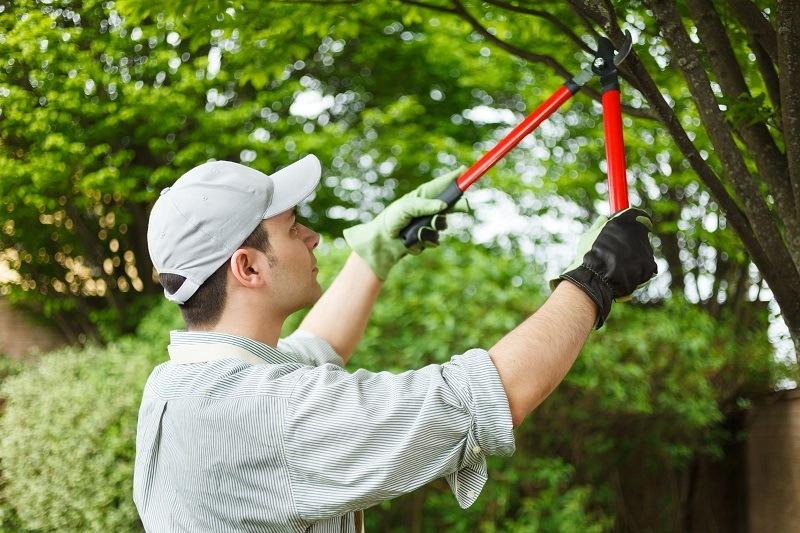 A Beginner's Guide To Pruning A Tree