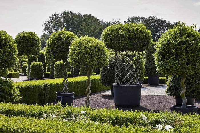 The Best Tree Shapes For Your Garden