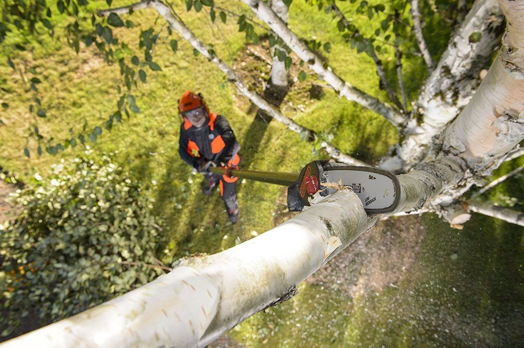Tree Trimming and Pruning At It's Best – BestPoleSaws.com